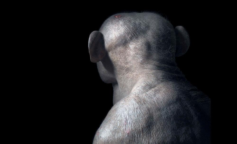 Chimp-Head.jpg