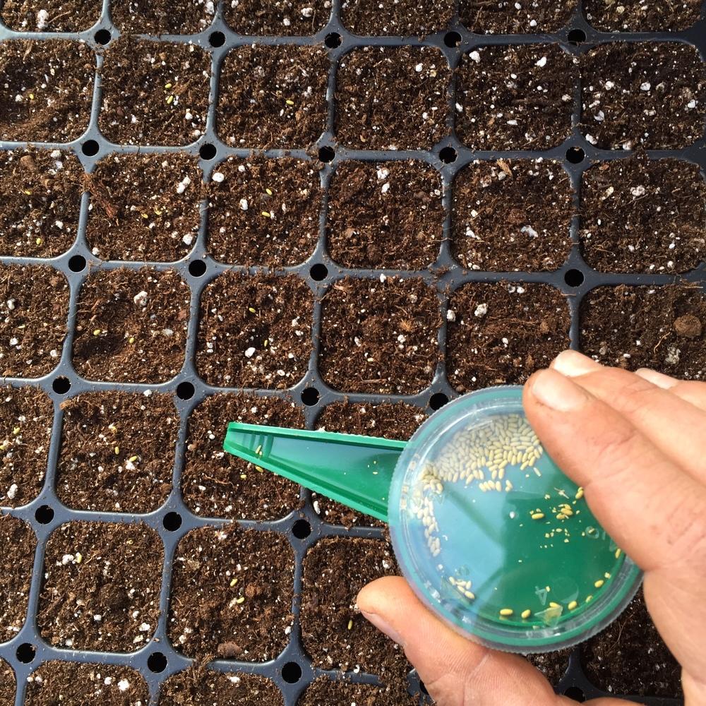 Seeding away