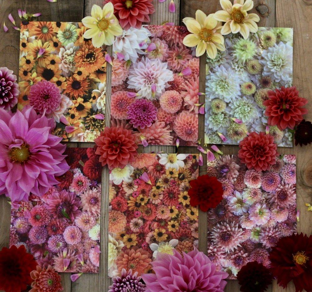 Shop flourish flower farm flourish flower farm goodies experiences mightylinksfo