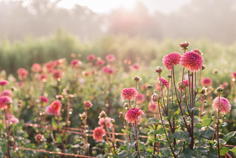 Press Flourish Flower Farm
