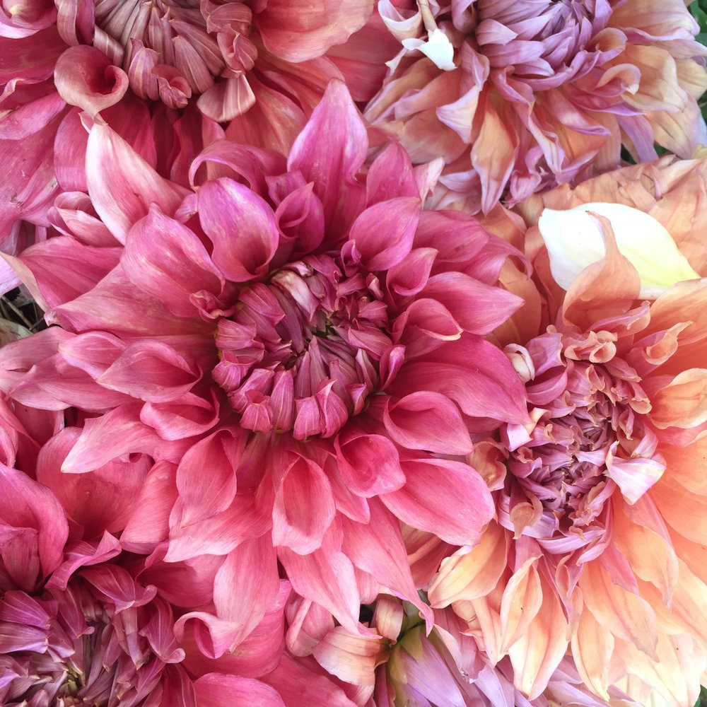 Shop Flourish Flower Farm