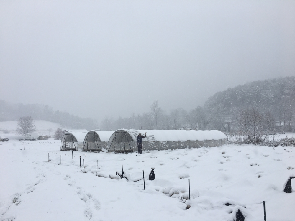 Keeping the hoop houses cleared of snow since they're not built to withstand too much weight. Field crops are all insulated under a layer of agribon row cover and snow is actually a great insulator too. Photo cred: farm helper extraordinaire Caris.