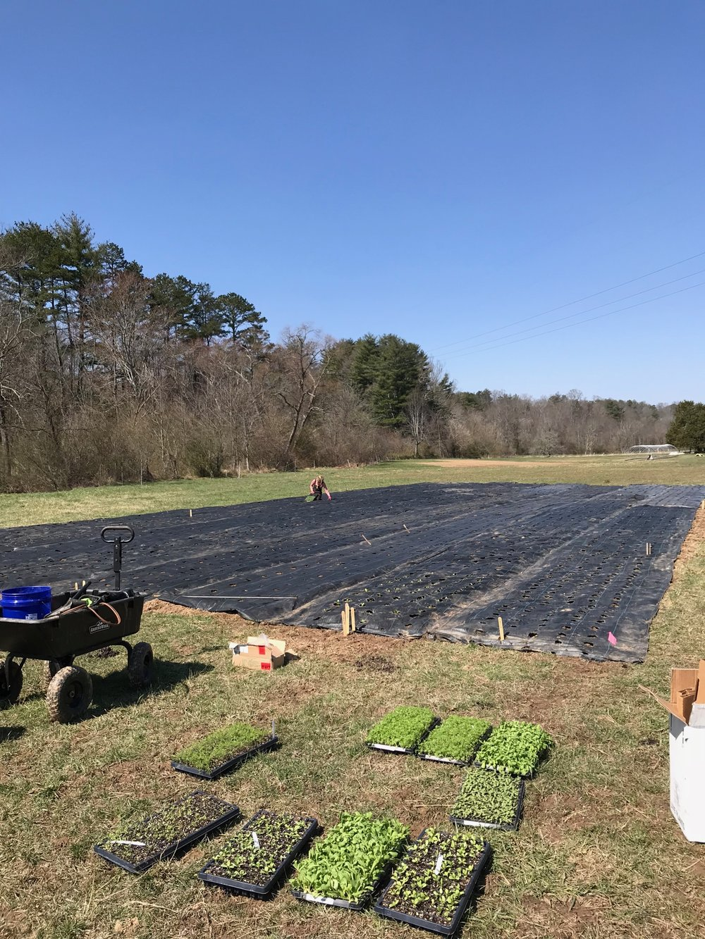 Planting Late Spring Crops