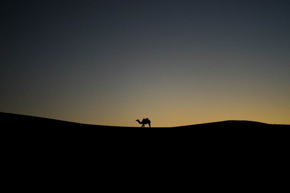 One of our camels resting during the sunset after carrying us to our camp.