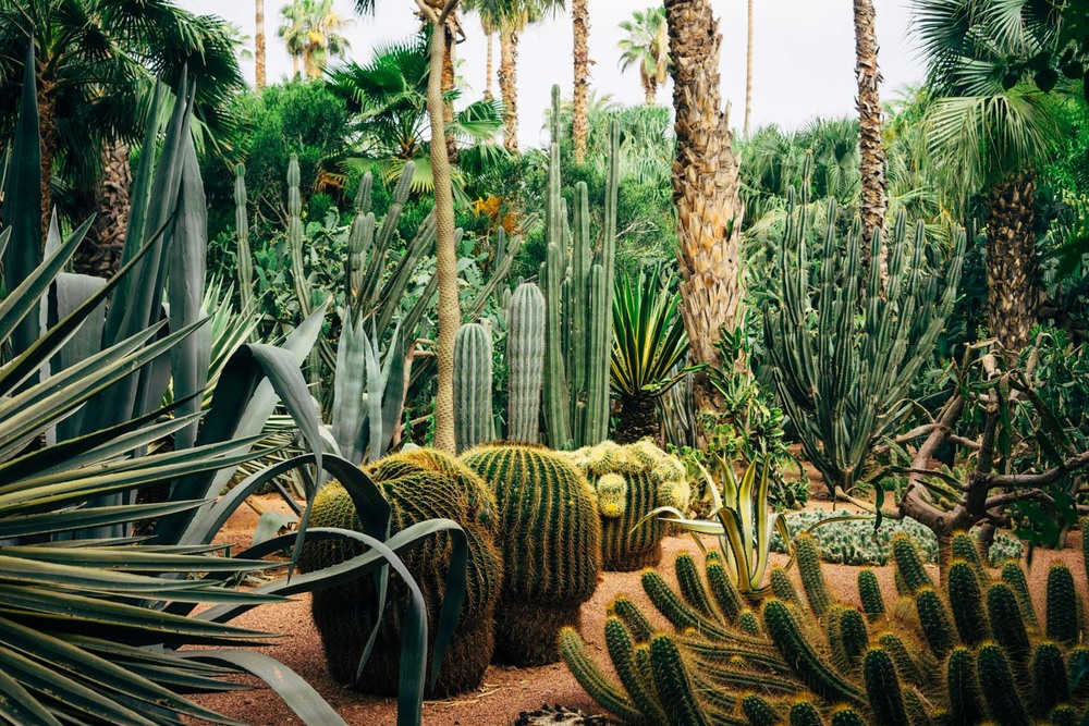 The perfectly manicured Marjorelle Gardens.