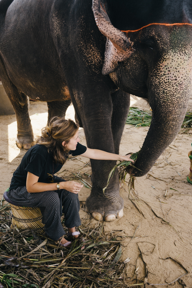 Feeding the elephants bamboo. Amazing how much they eat!