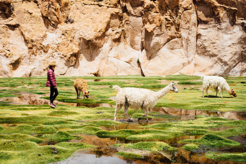 """In Bolivia, they call me the """"llama whisperer""""."""