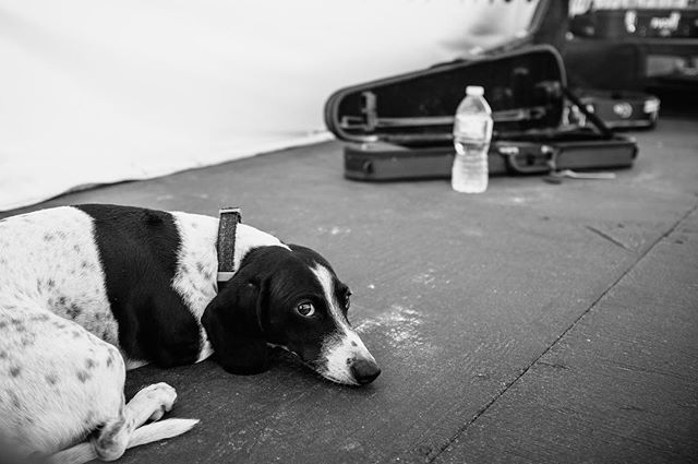 Bring your dogs on stage always. #facesofrocky