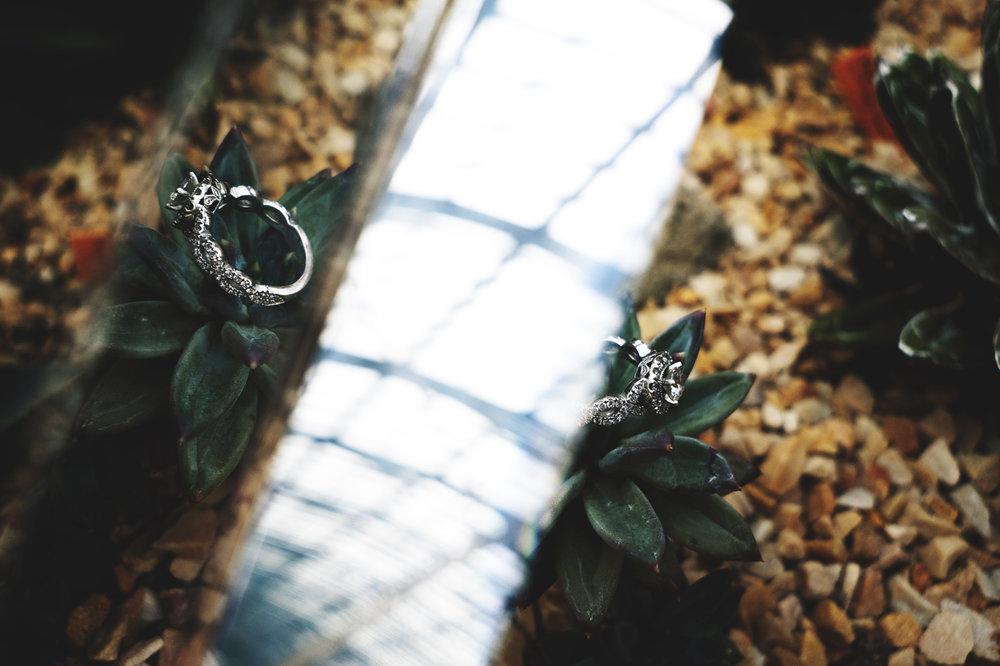 conservatory-engagement-session13.jpg