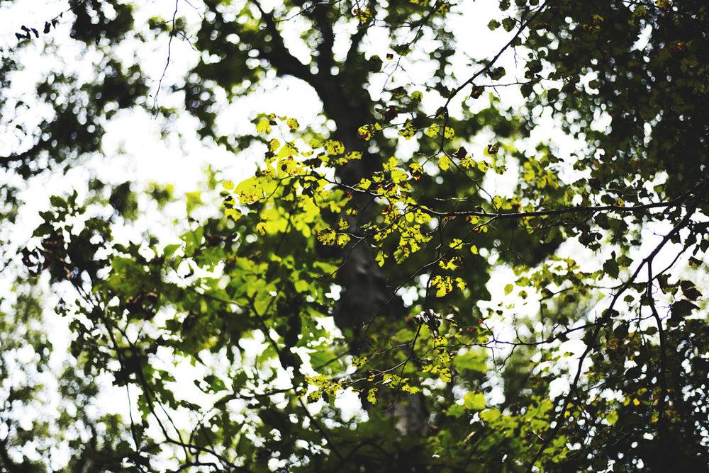Taltree-Aroretum-Indiana-Couples-Sessions060.jpg