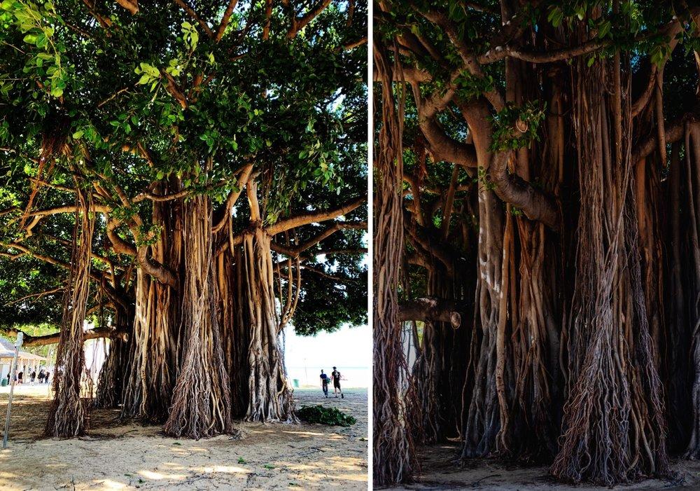 108_Honeymoon-Oahu_0013_Honeymoon-Oahu_0014_oahu.jpg