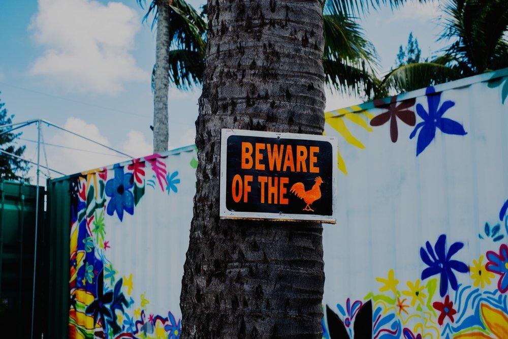 155_Honeymoon-Oahu_0084.jpg