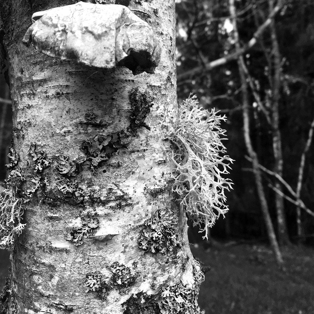 lichen-spo.jpg