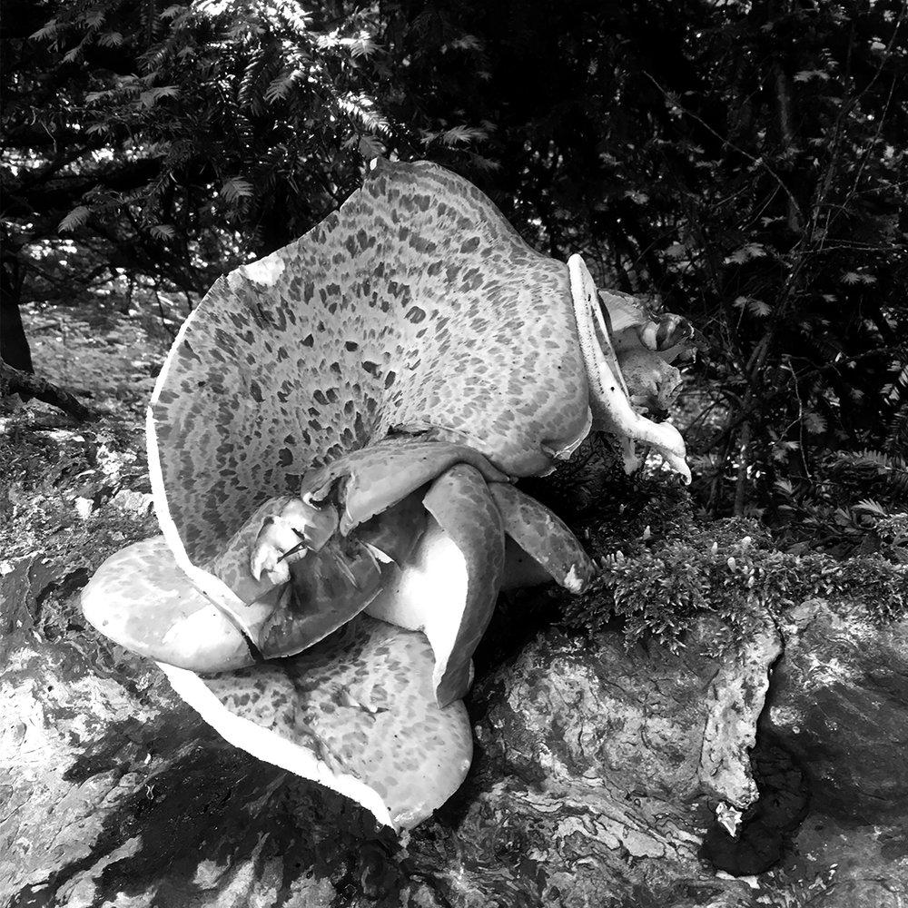 CARVEspiration-mushroom.jpg