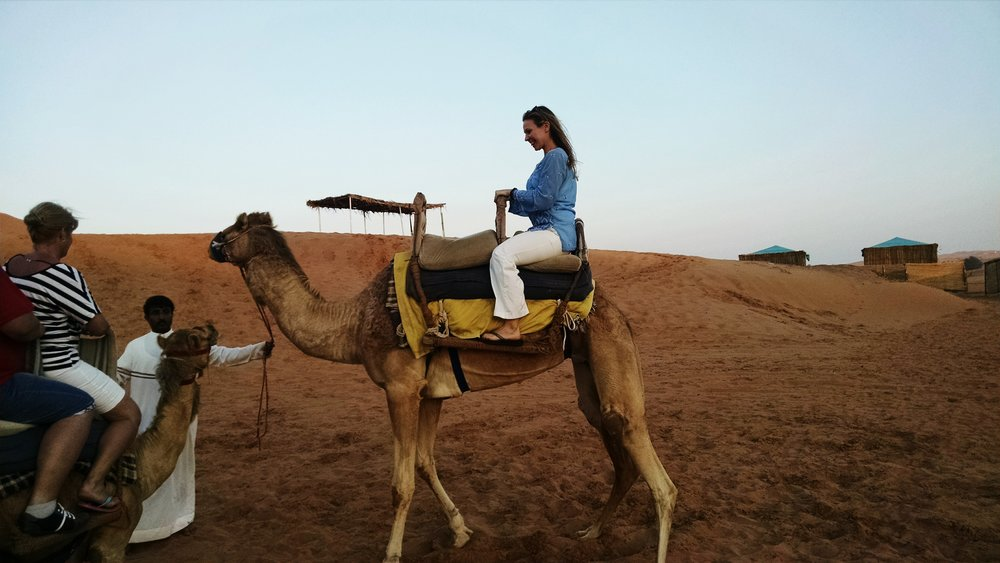 Camel trekking in Ras Al Khaimah, United Arab Emirates