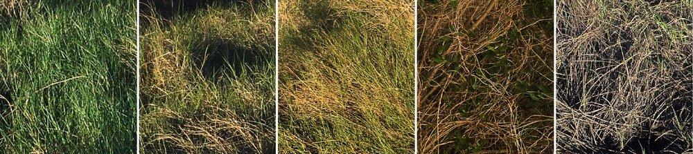 Marsh print time lapse-01.jpg