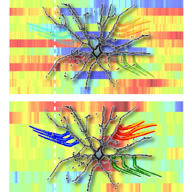 Gene Expression Patterns May Underlie >> Recent Publications Calipari Lab