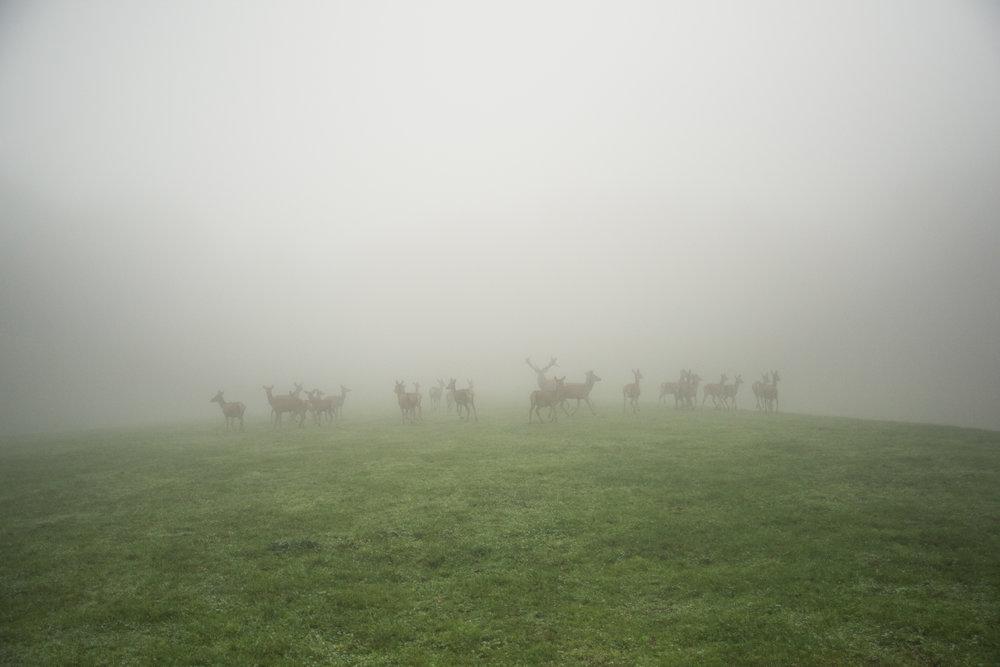 Sharon_Joetama_deer_farm-1.jpg