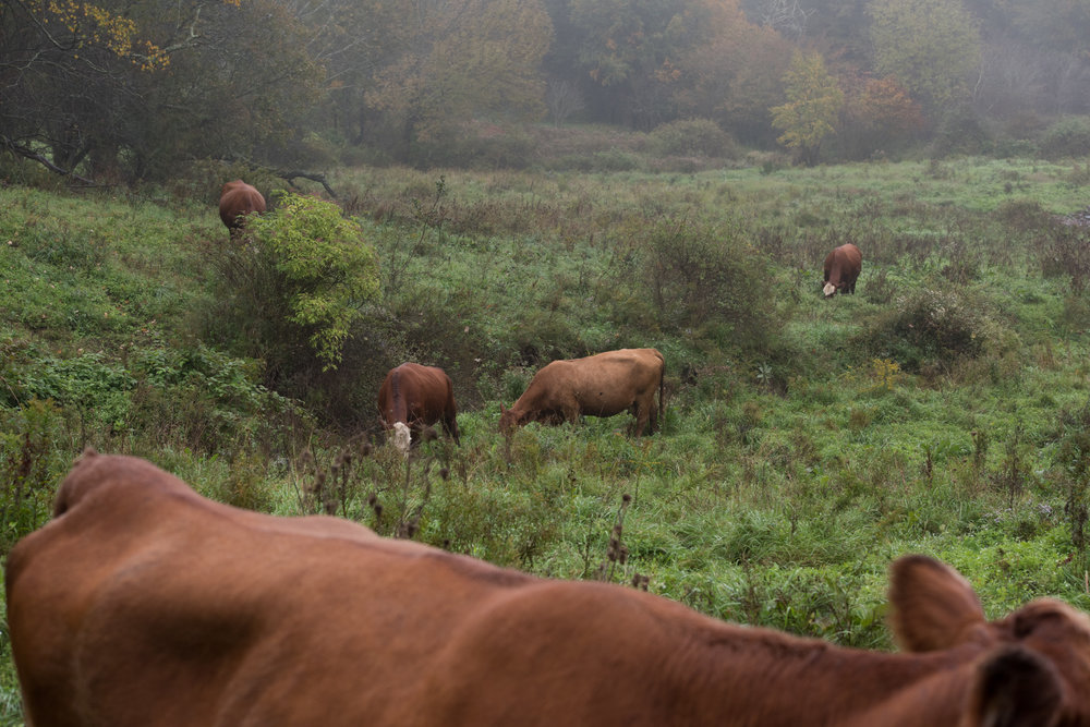 Sharon_Joetama_deer_farm-4.jpg