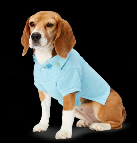 Ralph Lauren Dog Polo.png