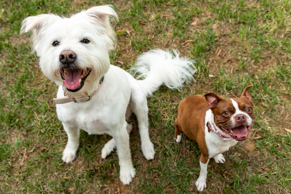 Riley and Olivia are two of the pet-testants taking part in So You Think You Can Bark, a Feb. 1 fundraiser for the nonprofit Stand For Animals.