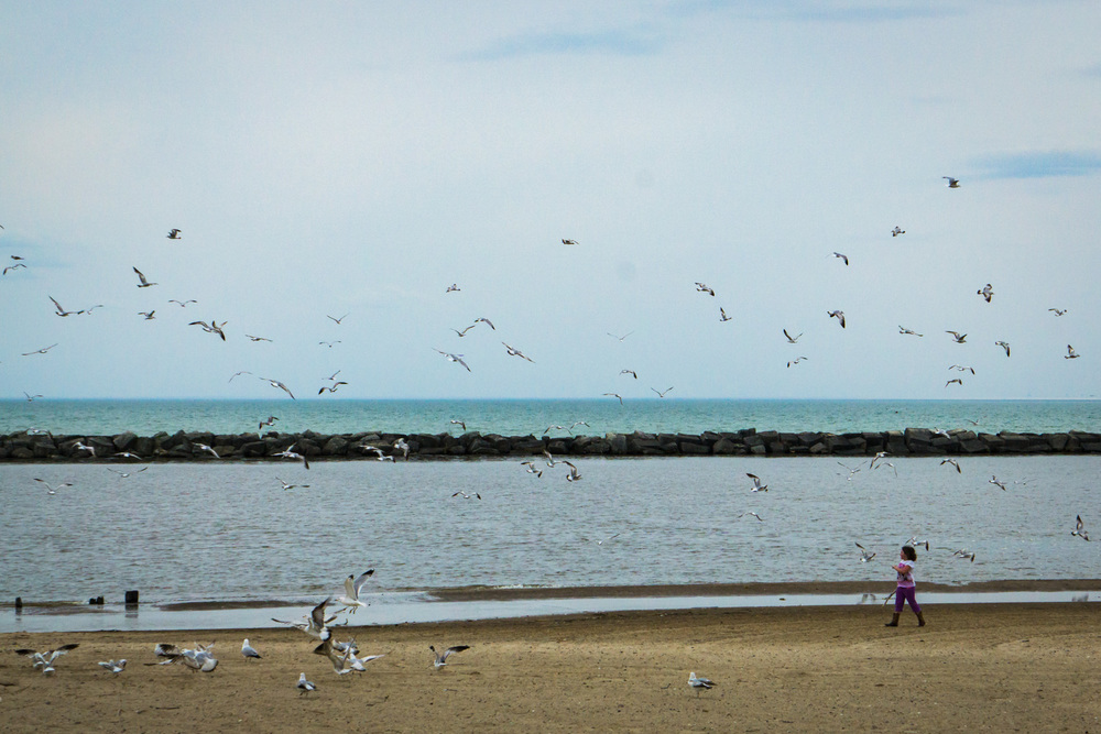 Girl chasing seagulls along Lake Michigan