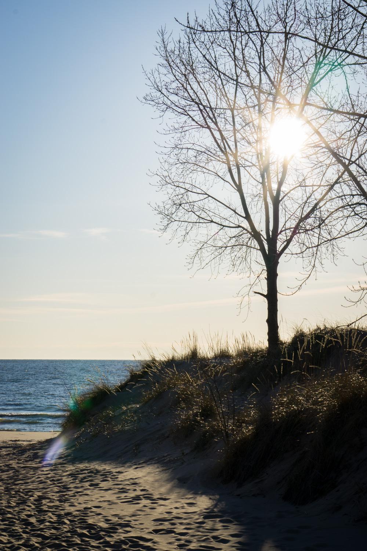 Glaring sun behind the beach trees