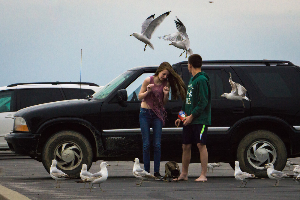 Feeding seagulls while surprised at a few on the car