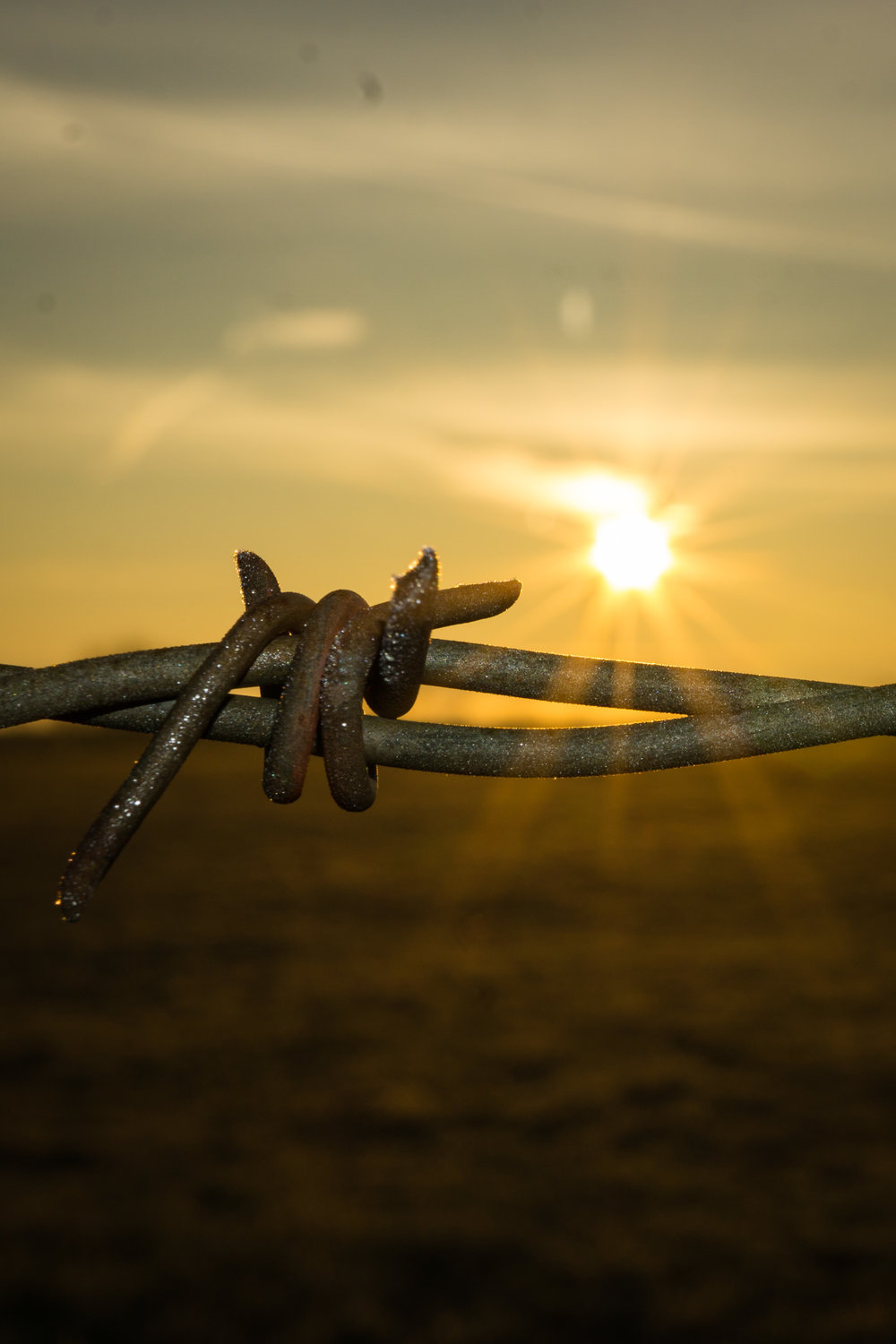 barbed wire fence being highlighted by the morning sun.