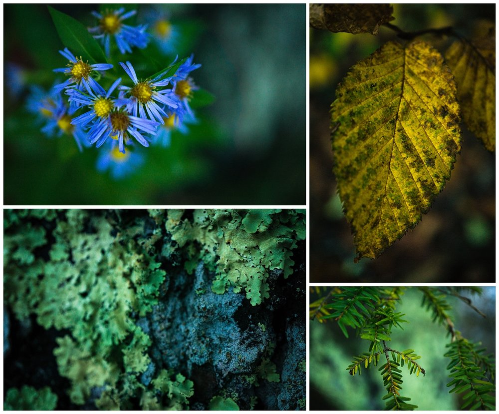 Macro Photography of Great Smoky Mountain Region