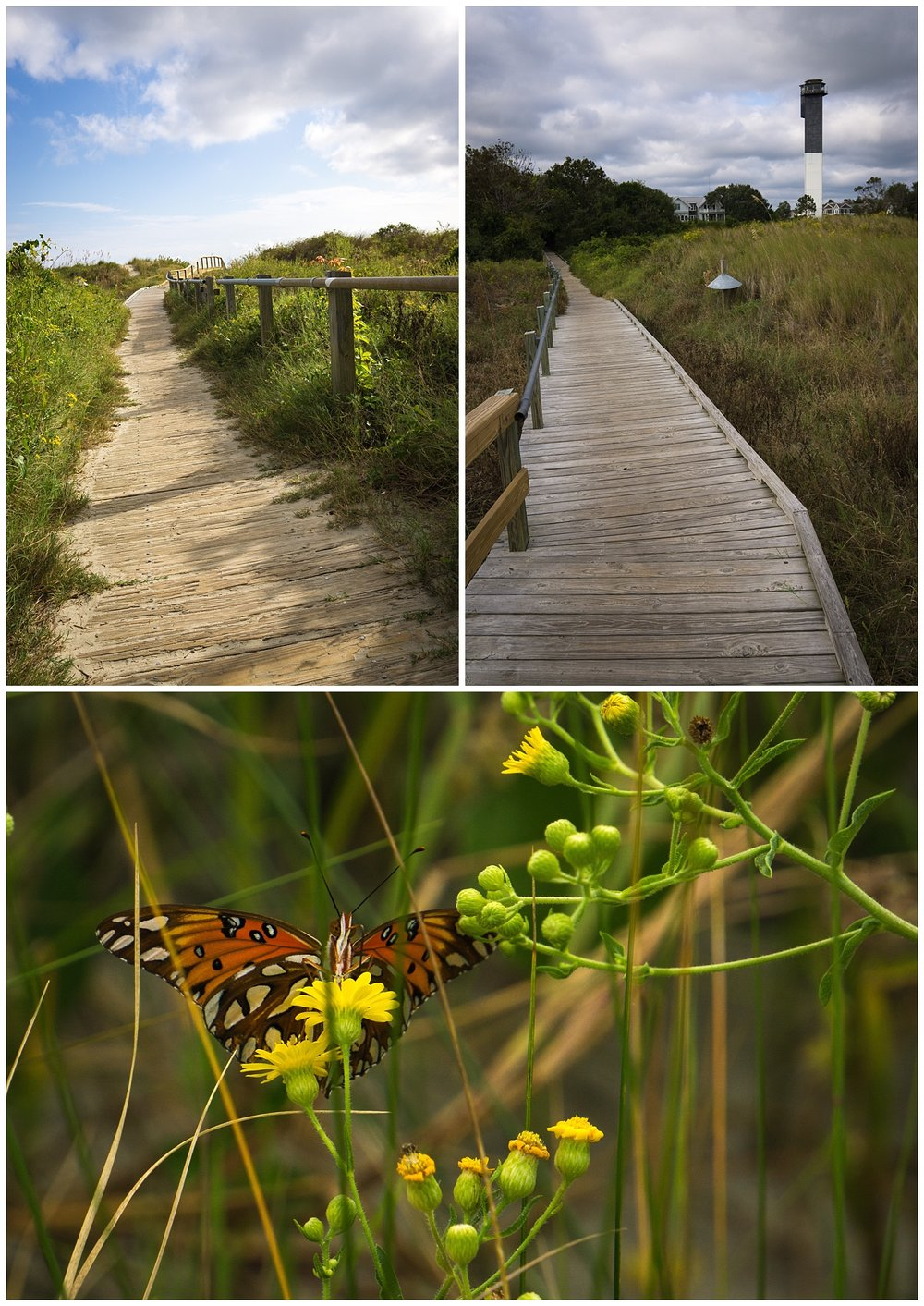 Walkway to Sullivans Island and Crimson Butterfly