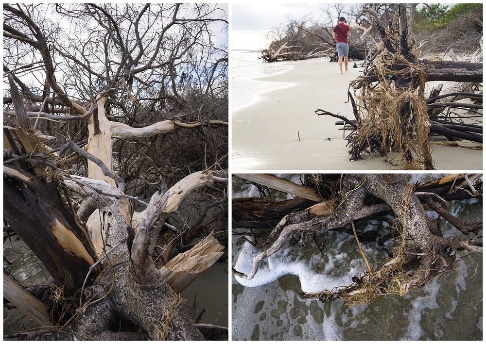 Sullivans Island Driftwood