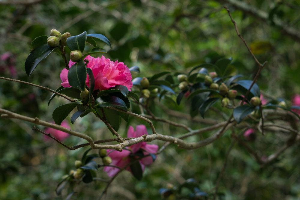CCPhoto_MagnoliaPlantation_OCT17-31.jpg