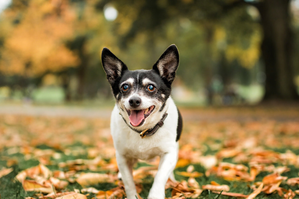 The Dog with a Bow Photography_-3.jpg