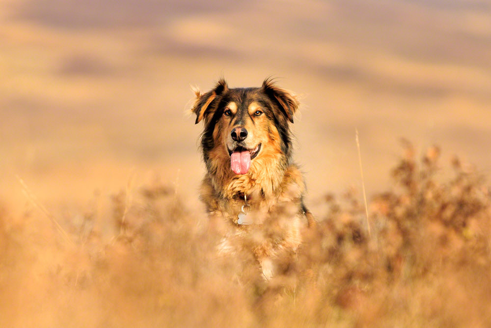 the_dog_with_a_bow_photography_calgary_pet_dogs-9.jpg