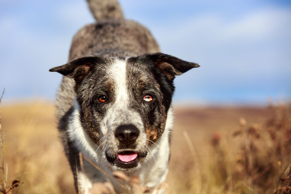 the_dog_with_a_bow_photography_calgary_pet_dogs-10.jpg