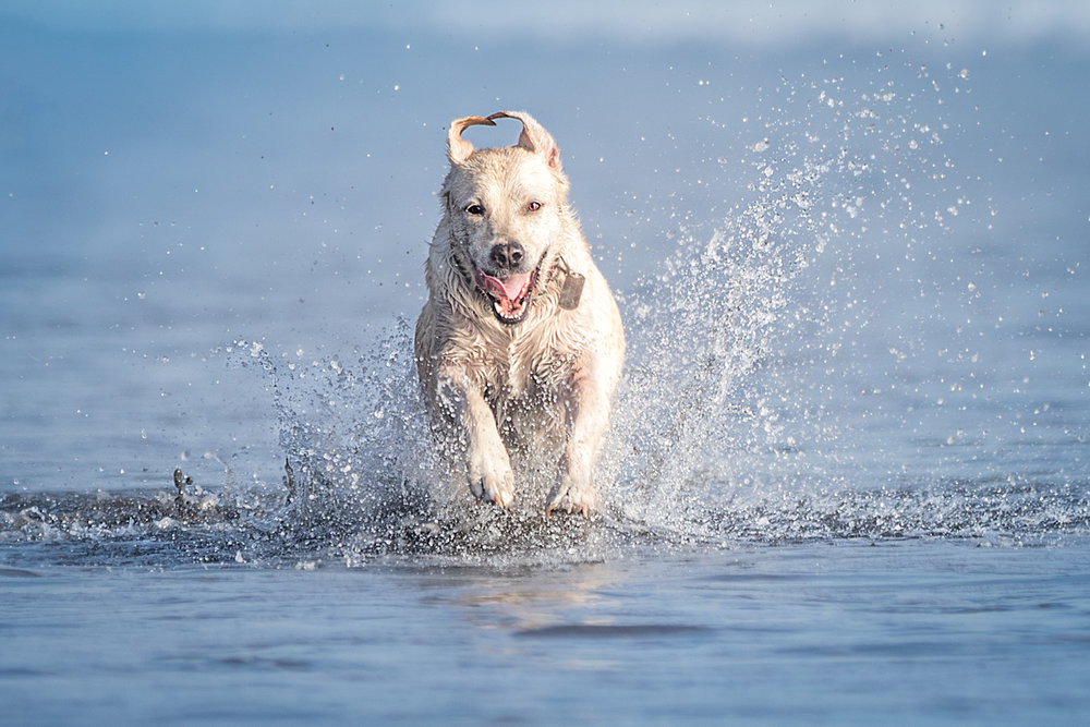 the_dog_with_a_bowphotography_CostaRica-15.jpg
