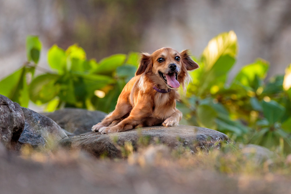 the_dog_with_a_bowphotography_CostaRica-3.jpg