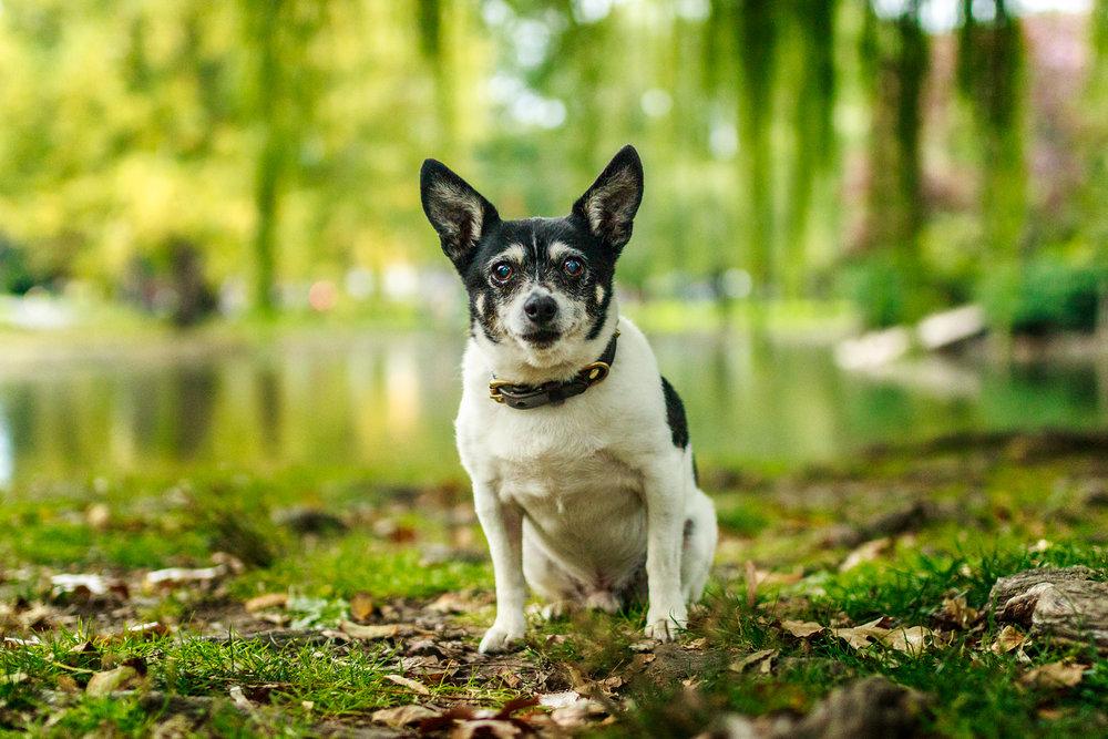 The_Dog-with-a-Bow_Photography_Cochrane_Calgary-20.jpg