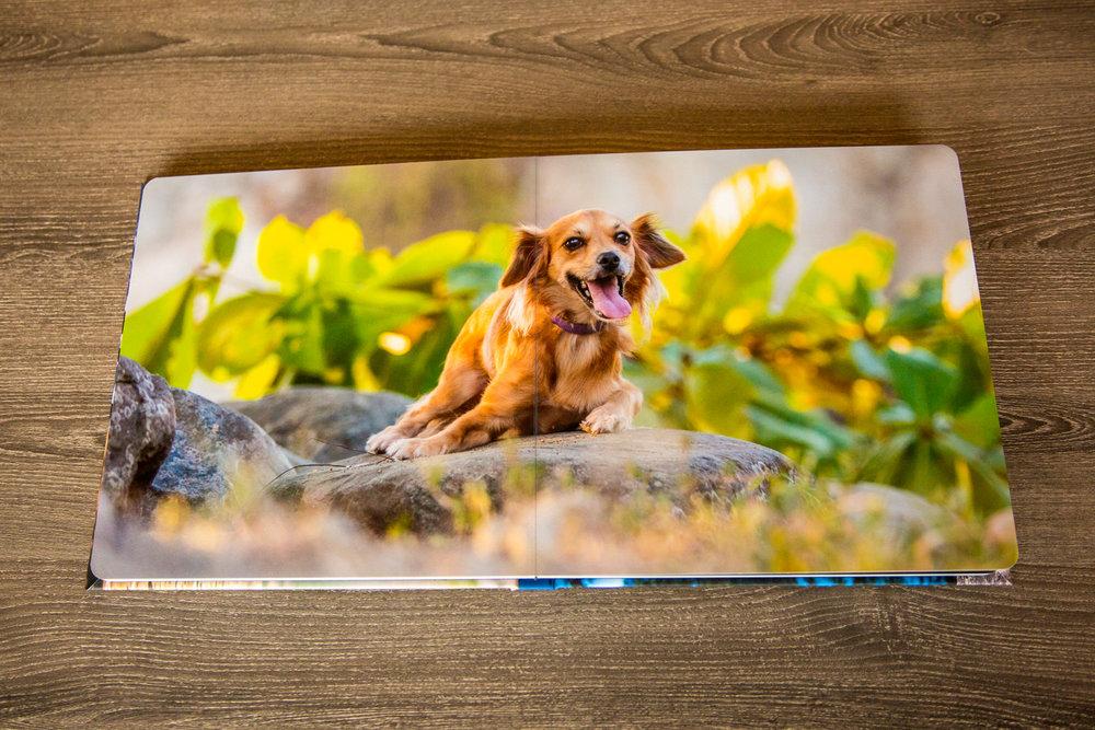 The-dog-with-a-bow-photography-calgary-cochrane-7.jpg