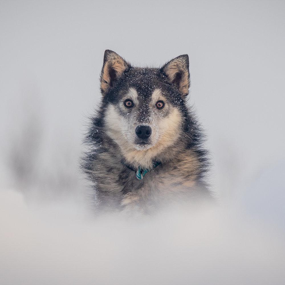 The-dog-with-a-bow-photography-calgary-cochrane-8.jpg