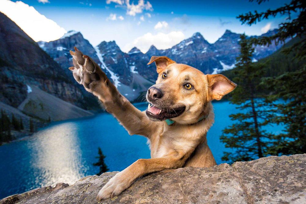The-dog-with-a-bow-photography-calgary-cochrane-4.jpg
