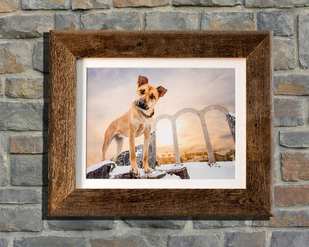 The-dog-with-a-bow-photography-calgary-cochrane-12.jpg