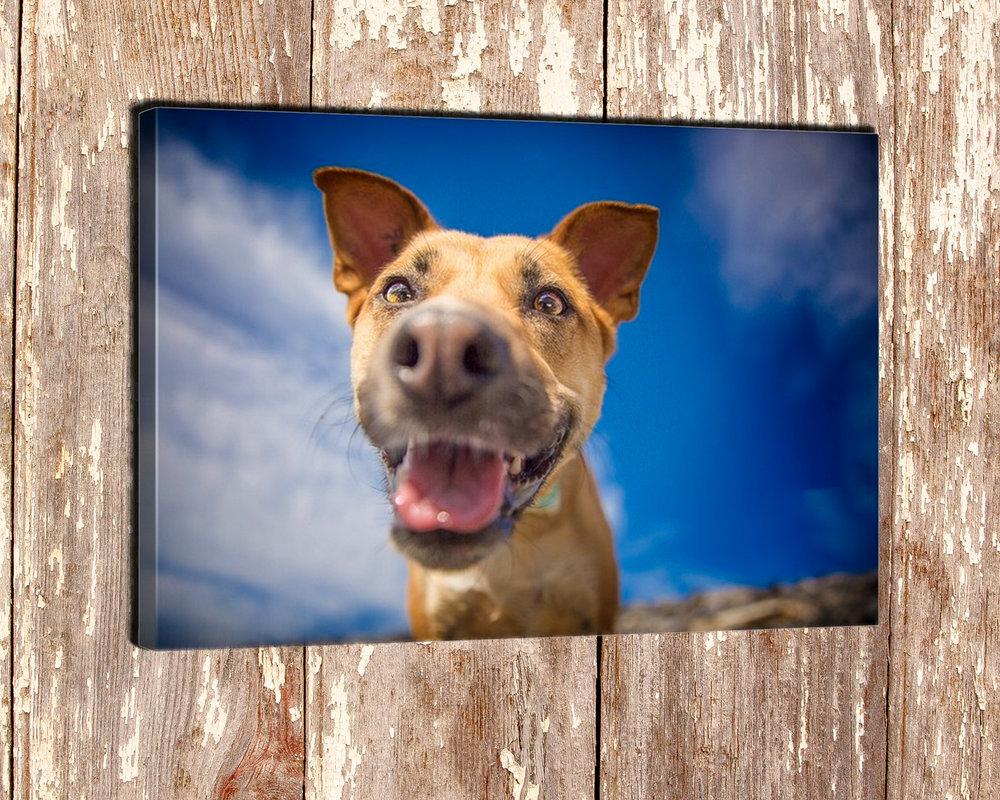 The-dog-with-a-bow-photography-calgary-cochrane-13.jpg