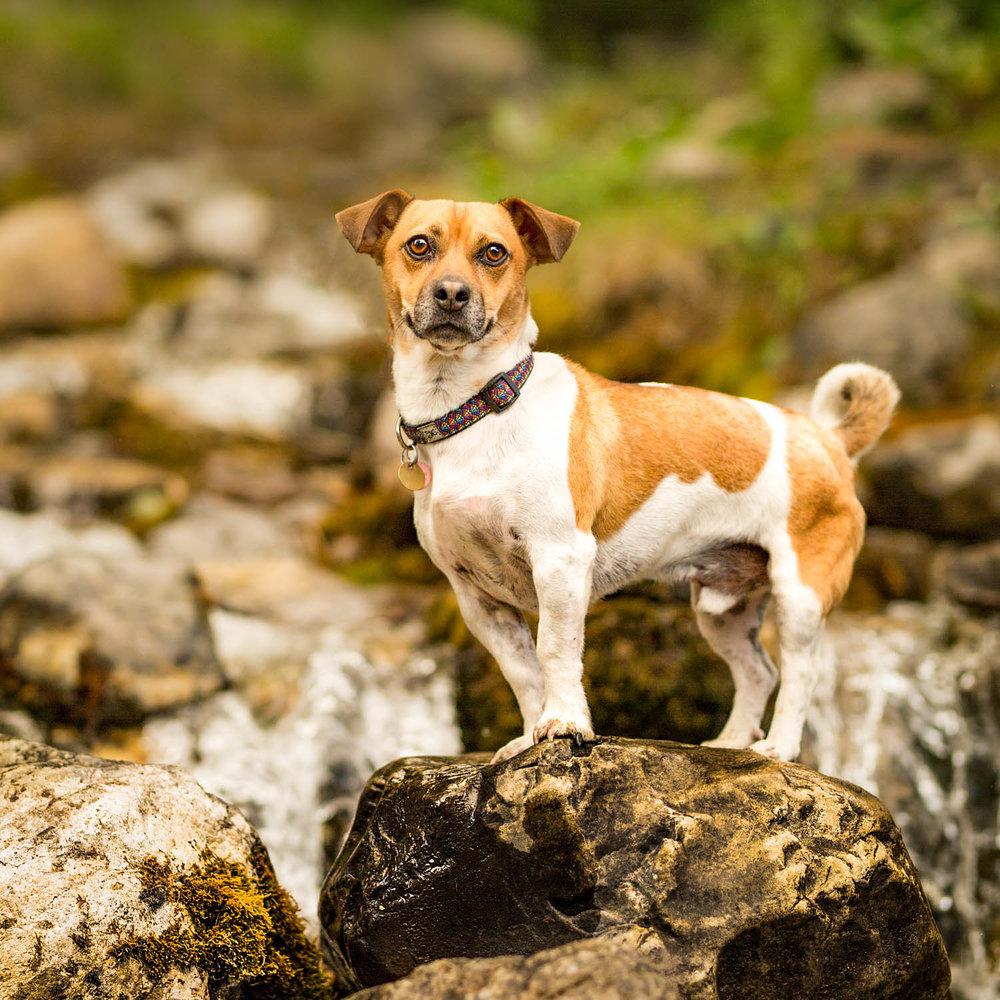 The-dog-with-a-bow-photography-calgary-cochrane-6.jpg