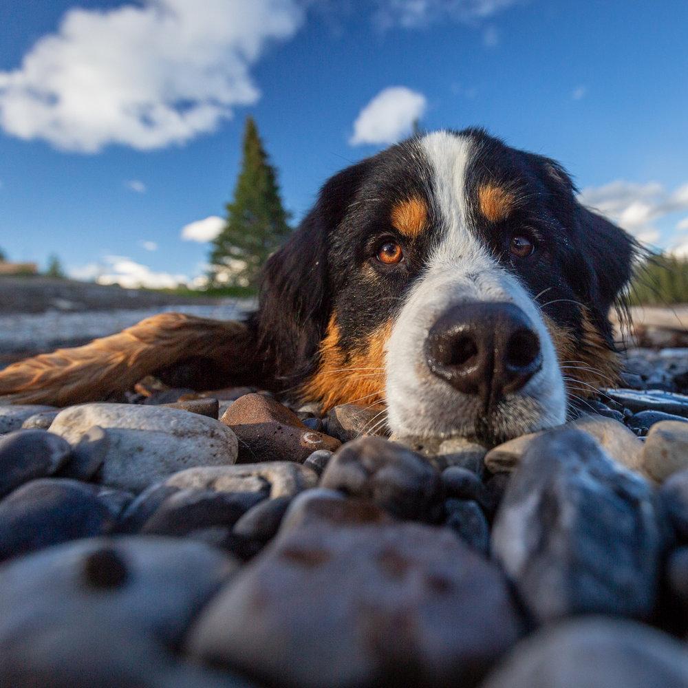 The-dog-with-a-bow-photography-calgary-cochrane-3.jpg