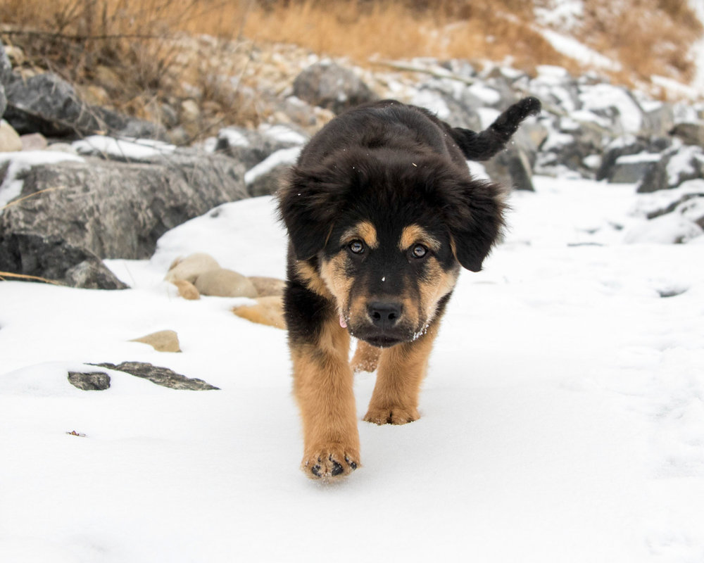 The-dog-with-a-bow-photography-calgary-cochrane-19.jpg