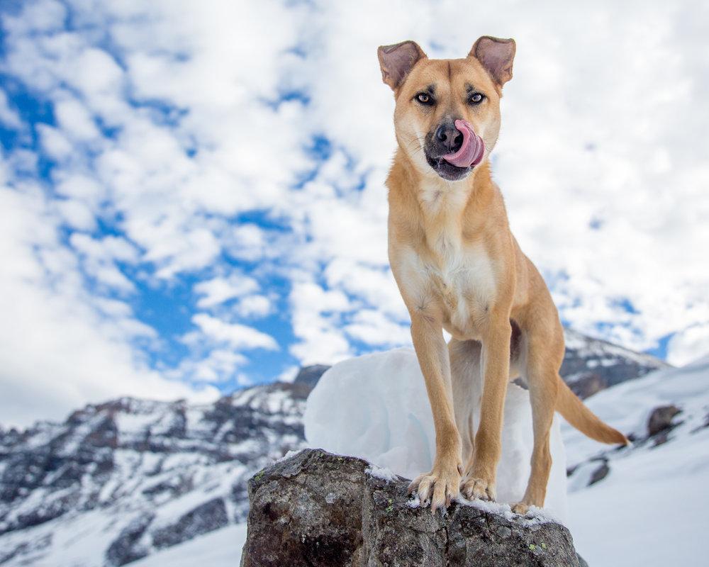 The-dog-with-a-bow-photography-calgary-cochrane-17.jpg