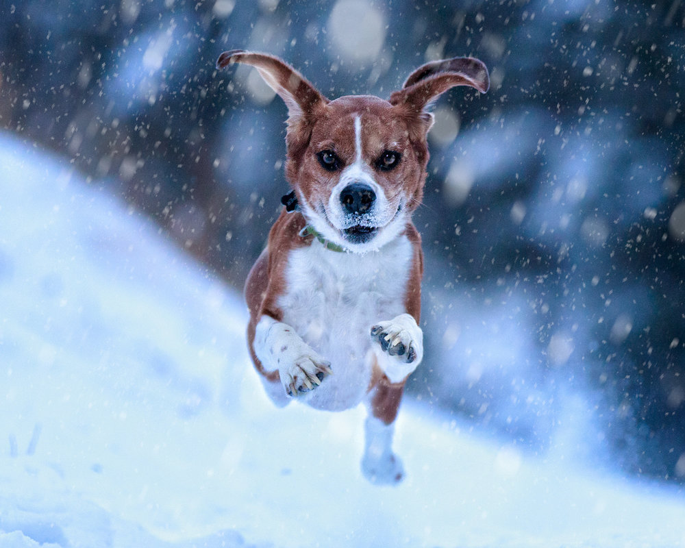 The-dog-with-a-bow-photography-calgary-cochrane-10.jpg