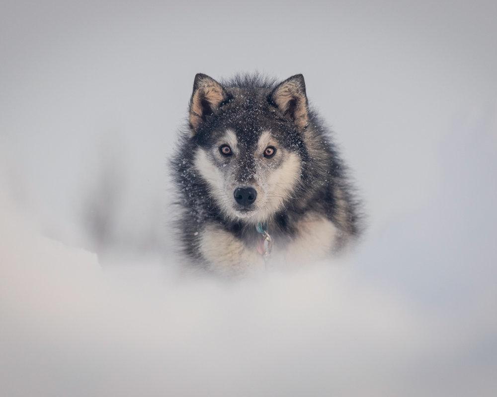 The-dog-with-a-bow-photography-calgary-cochrane-21.jpg
